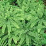 Ferns, Flowers, Grasses, & Ground Covers